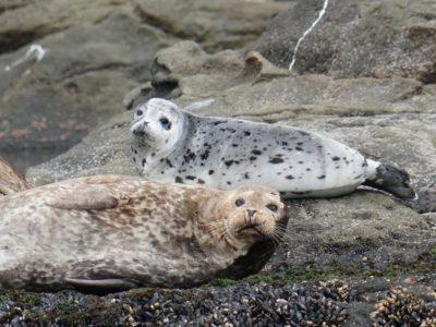 Seals and Sea Lions Orange County CA