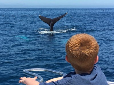 Whale watching Long Beach CA