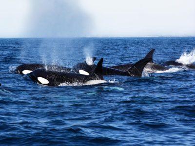 Whale watching Huntington Beach CA