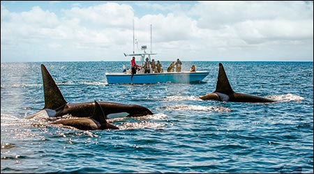 Whale Watching Orange County CA