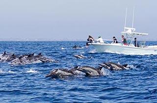 EMW Whale Watching