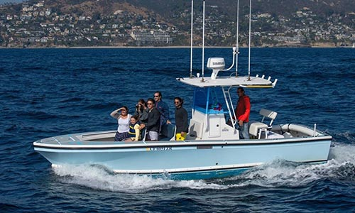 Private Whale Watching Charters in Newport Beach CA