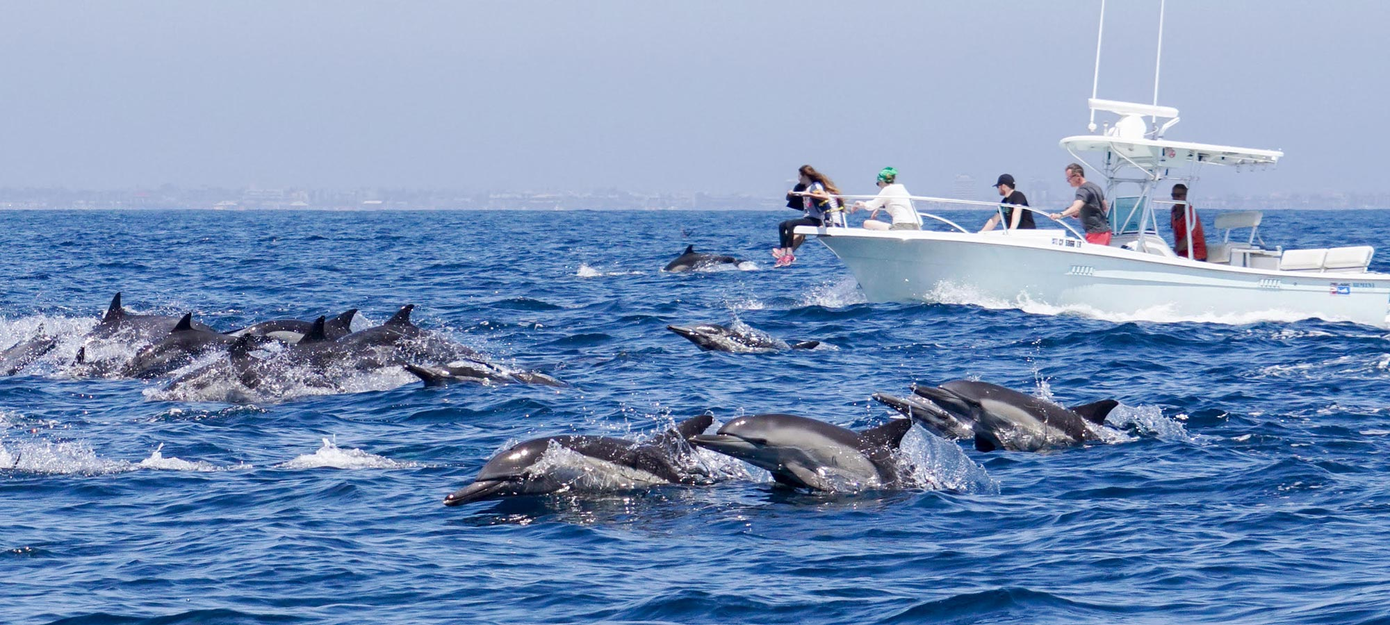 EMW Newport Beach Whale Watching Tours